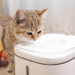 Smart_water_dispenser (4)